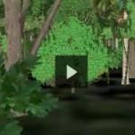 Cu noul Google Earth 3D te plimbi prin jungla amazoniana!